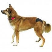 Трусы для собаки TRIXIE Люкс, размер М (40-49 см)