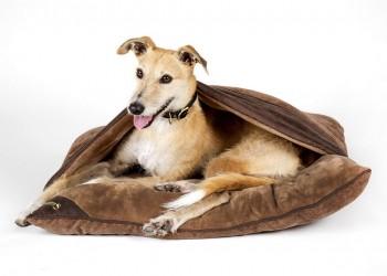 """Лежак - нора для собак """"Chester"""" SCRUFFS, коричневый"""